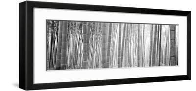 Bamboo Forest, Sagano, Kyoto, Japan--Framed Photographic Print