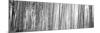 Bamboo Forest, Sagano, Kyoto, Japan--Mounted Photographic Print