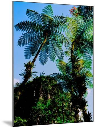 Low angle view of West Indian treefern (Cyathea arborea), Papillote Wilderness Retreat, Dominica--Mounted Photographic Print