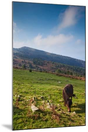 Horse grazing along the Jaizkibel Road, Hondarribia, Guipuzcoa Province, Basque Country Region,...--Mounted Photographic Print