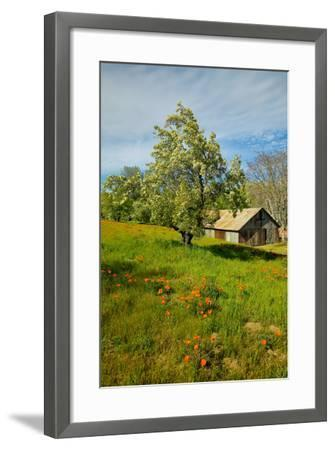 Old barn next to a colorful bouquet of spring flowers and California Poppies near Lake Hughes, CA--Framed Photographic Print