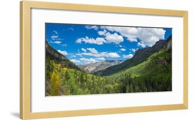 Elevated view of trees on landscape along Country Road 361, Camp Bird Road, San Juan Mountains,...--Framed Photographic Print
