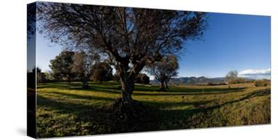 View of a field, Santa Eulalia De Roncana, Barcelona, Catalonia, Spain--Stretched Canvas Print
