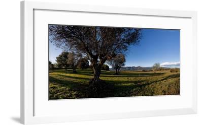 View of a field, Santa Eulalia De Roncana, Barcelona, Catalonia, Spain--Framed Photographic Print
