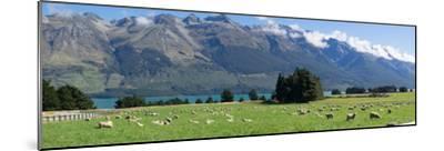 Sheep grazing in pasture near Blanket Bay Lodge, Lake Wakatipu, New Zealand--Mounted Photographic Print