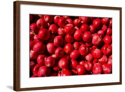 Close-up of picked apples--Framed Photographic Print