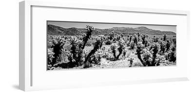 Cholla cactus in Joshua Tree National Park, California, USA--Framed Photographic Print