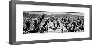 Cholla cactus in Joshua Tree National Park, California, USA--Framed Photographic Print