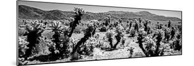 Cholla cactus in Joshua Tree National Park, California, USA--Mounted Photographic Print