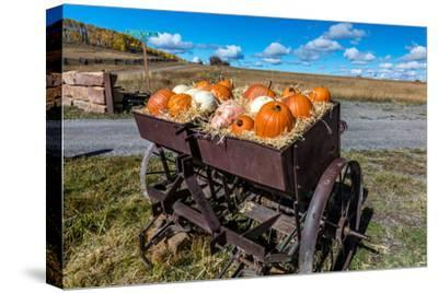 Display of Halloween Pumpkins, Hastings Mesa, Colorado - near Ridgway--Stretched Canvas Print