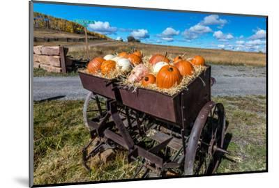 Display of Halloween Pumpkins, Hastings Mesa, Colorado - near Ridgway--Mounted Photographic Print