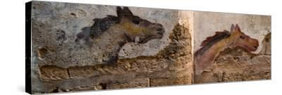Mural of animal on wall, Acre (Akko), Israel--Stretched Canvas Print