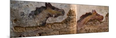 Mural of animal on wall, Acre (Akko), Israel--Mounted Photographic Print