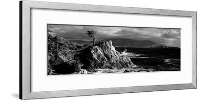 Lone cypress on the coast, Pebble Beach, Monterey County, California, USA--Framed Photographic Print