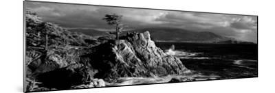 Lone cypress on the coast, Pebble Beach, Monterey County, California, USA--Mounted Photographic Print