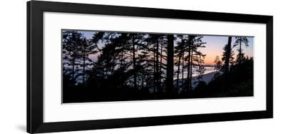 Sitka Spruce trees on Long Beach at sunset, Vancouver Island--Framed Photographic Print