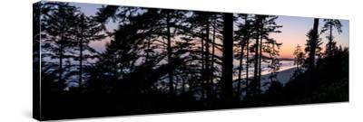 Sitka Spruce trees on Long Beach at sunset, Vancouver Island--Stretched Canvas Print