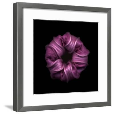 Darkness E3 - Purple Morning Glory Bud-Doris Mitsch-Framed Photographic Print