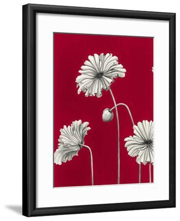 In Bloom C - Recolor-Jo Mathers-Framed Premium Giclee Print