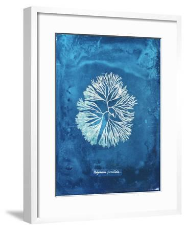 Natural Forms Blue 6-THE Studio-Framed Premium Giclee Print