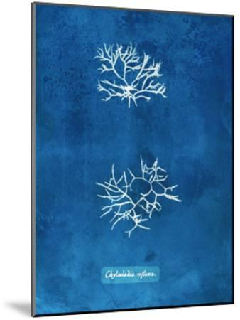 Natural Forms Blue 7-THE Studio-Mounted Premium Giclee Print