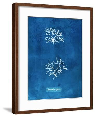 Natural Forms Blue 7-THE Studio-Framed Premium Giclee Print