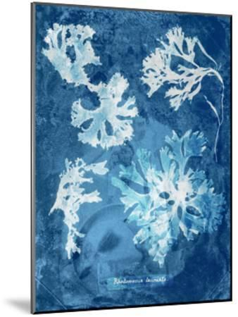 Natural Forms Blue 1-THE Studio-Mounted Premium Giclee Print