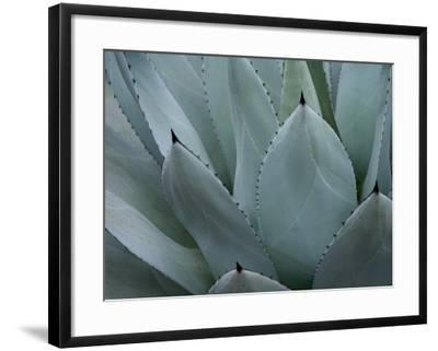 Whale's Tongue Agave-Karen Ussery-Framed Premium Giclee Print