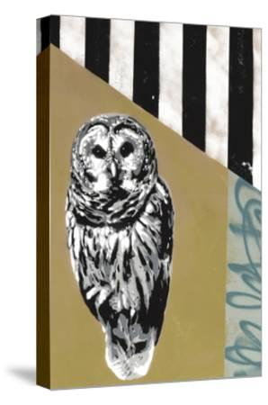 Barred Owl - Recolor-Urban Soule-Stretched Canvas Print
