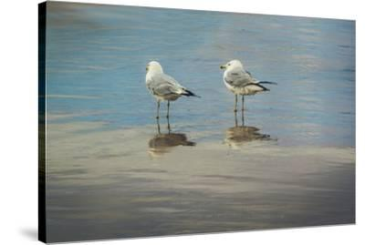 Silent They Wait-Eunika Rogers-Stretched Canvas Print