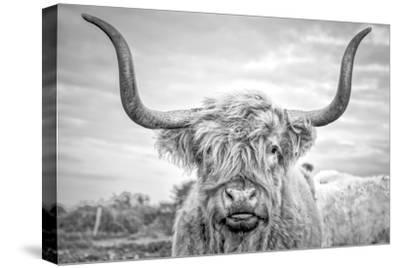 Highland Cows I-Joe Reynolds-Stretched Canvas Print