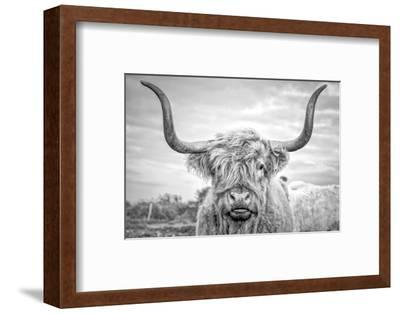 Highland Cows I-Joe Reynolds-Framed Premium Photographic Print