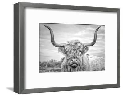 Highland Cows I-Joe Reynolds-Framed Photographic Print