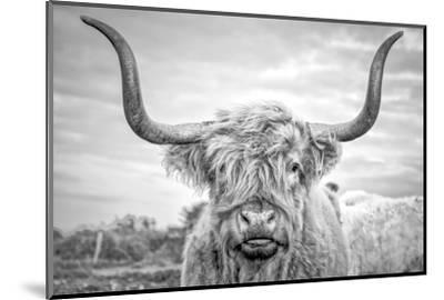 Highland Cows I-Joe Reynolds-Mounted Photographic Print