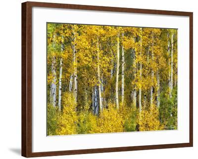 Yellow Woods II-David Drost-Framed Photographic Print