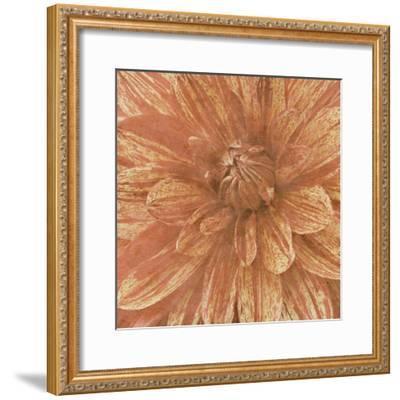 Wall Flower IX-Alonzo Saunders-Framed Photographic Print