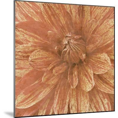 Wall Flower IX-Alonzo Saunders-Mounted Photographic Print