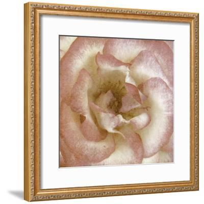 Wall Flower VI-Alonzo Saunders-Framed Photographic Print