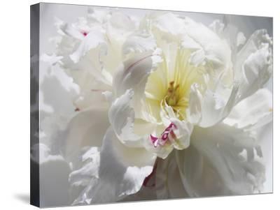 Breathless III-Irena Orlov-Stretched Canvas Print