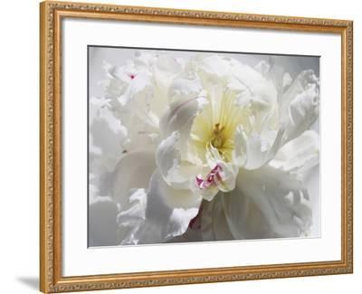 Breathless III-Irena Orlov-Framed Photographic Print