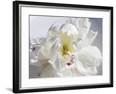 Breathless IV-Irena Orlov-Framed Photographic Print