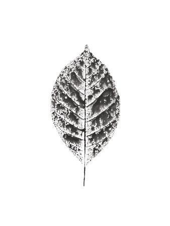 Harvest Sentiments V BW no Words--Framed Art Print