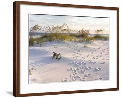 Footprints in the Sand at Sunset in the Dunes of Pensacola Beach, Florida.-forestpath-Framed Photographic Print