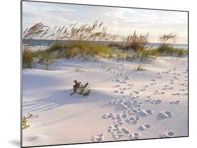 Footprints in the Sand at Sunset in the Dunes of Pensacola Beach, Florida.-forestpath-Mounted Photographic Print