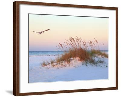 A Brown Pelican Flies over a White Sand Florida Beach at Sunrise-Steve Bower-Framed Photographic Print