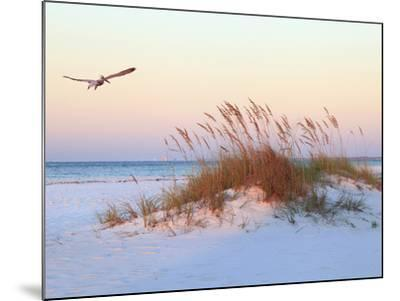 A Brown Pelican Flies over a White Sand Florida Beach at Sunrise-Steve Bower-Mounted Photographic Print