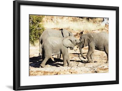 African elephant , Mapungubwe Nat'l Park, UNESCO World Heritage Site, Limpopo, South Africa, Africa-Christian Kober-Framed Photographic Print
