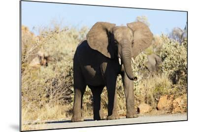African elephant , Mapungubwe Nat'l Park, UNESCO World Heritage Site, Limpopo, South Africa, Africa-Christian Kober-Mounted Photographic Print
