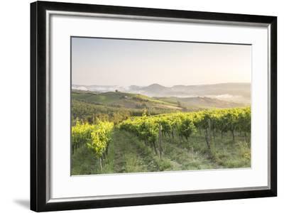 Vineyards near to Orveito, Umbria, Italy, Europe-Julian Elliott-Framed Photographic Print