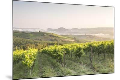 Vineyards near to Orveito, Umbria, Italy, Europe-Julian Elliott-Mounted Photographic Print